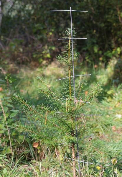 PlantaGard Stachelbaum