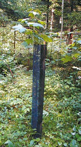 PlantaGard Baumschutz-Netzhülle Diagonal