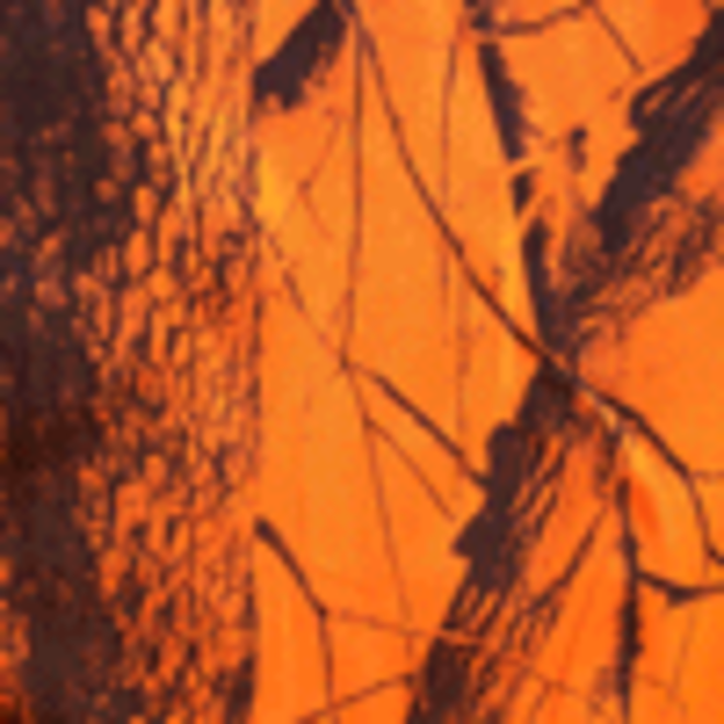 Realtree edge orange camouflage